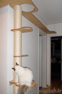 Katzenlandschaft De Innenbereich